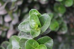 Liście piękna roślina obraz stock