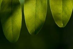 Liście Piękny liść Lato Forrest obrazy royalty free