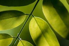 Liście Piękny liść Lato Forrest fotografia royalty free