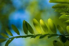 Liście Piękny liść Lato Forrest obraz royalty free