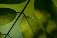 Liście Piękny liść Lato Forrest zdjęcie stock
