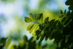 Liście Piękny liść Lato Forrest obrazy stock