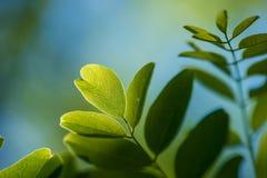 Liście Piękny liść Lato Forrest zdjęcia stock