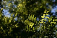 Liście Piękny liść Lato Forrest obraz stock