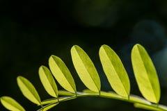 Liście Piękny liść Lato Forrest zdjęcie royalty free