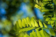 Liście Piękny liść Lato Forrest fotografia stock