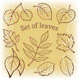 Liście roślina piktograma set Obrazy Royalty Free