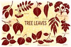 Liście roślina piktograma set Obraz Stock