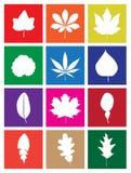 Liście roślina projekta kwadrata Płaskie ikony Fotografia Stock