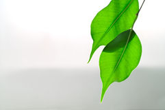 liście tło fotografia stock