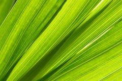 liście tło obraz stock