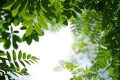 liście tło obrazy stock