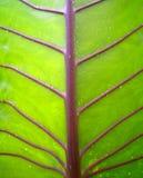 liście tło Zdjęcie Stock