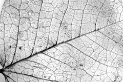 liście textured tło Obrazy Royalty Free