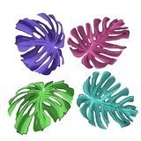 Liście tropikalny rosteniya m? nster, neonowy kolor ilustracja wektor