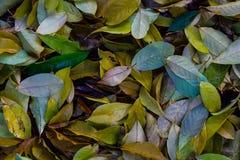 liście upaść Fotografia Stock