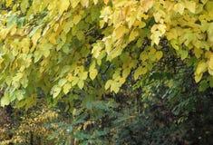 Liście w botanicznym gardena obrazy stock