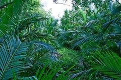 Liście w dżungli Tropikalnych rośliien Forest Green tle zdjęcie royalty free