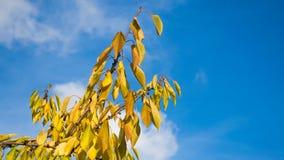 Liście w jesień dniu fotografia stock