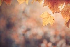 Liście w jesień kolorach obrazy royalty free