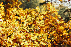 Liście w jesień lesie Zdjęcia Royalty Free