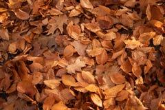 Liście w jesień parku zdjęcia royalty free