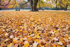 Liście w jesieni zdjęcie stock