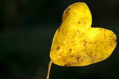 liście w kształcie serca Obrazy Royalty Free