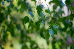 Liście w parku, zdjęcie stock