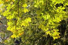 Liście w parku Zdjęcie Royalty Free