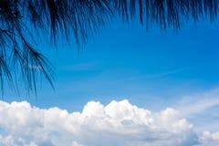 Liście w przodzie biały clound w niebieskim niebie Przestrzeń na ce Obraz Royalty Free