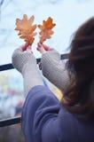 Liście w rękach Zdjęcia Royalty Free