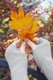 Liście w rękach Zdjęcie Stock