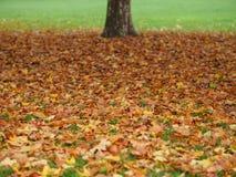 Liście w spadku z drzewem fotografia stock