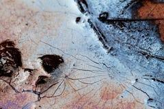 Liście w wazeliniarskiej wodzie obrazy royalty free