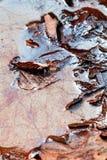 Liście w wazeliniarskiej wodzie fotografia stock