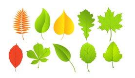 Liście w zieleni i koloru żółtego kolorach Zdjęcie Stock