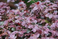 Liście z dewdrops zdjęcie stock