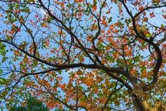 Liście z Jasnym niebieskiego nieba tłem Zdjęcia Royalty Free