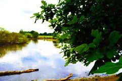 Liście z jeziorem i niebem zdjęcie stock