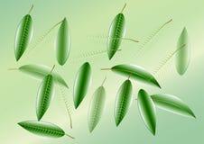 Liście, zieleń opuszczają tło, Wektorowa ilustracja Obrazy Stock