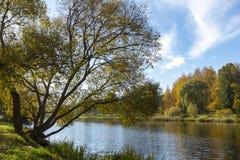 Liście zmienia kolor w pierwszy dniach sezon jesienny obraz stock