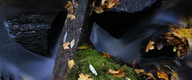 liści 6 wody. obraz stock