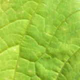 liści Obraz Stock