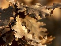liści Zdjęcie Royalty Free