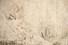 Liści druki Na betonie Zdjęcie Stock