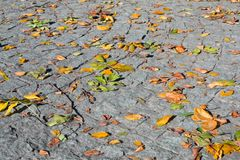 liści jesieni kamienia spacer obrazy royalty free