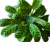 liści kropelka wody Fotografia Stock