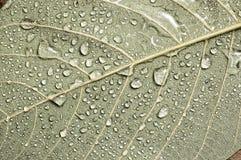 liści kropelka wody. Fotografia Stock