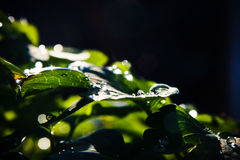 liści kropelka wody obrazy stock